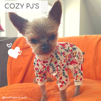 Eco-Pup Dog Clothing eco-friendly organic dog pajamas pjs